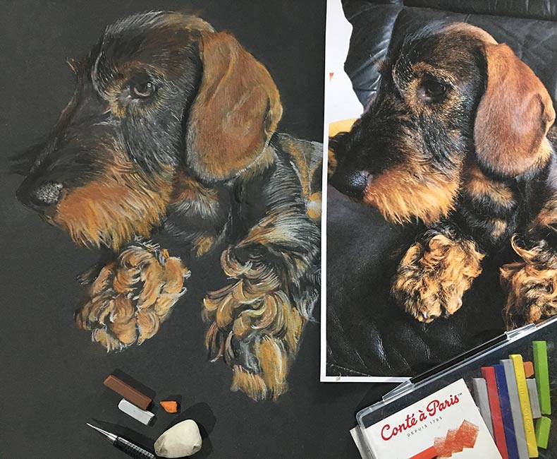 Pastel portrait of Teckel the dog